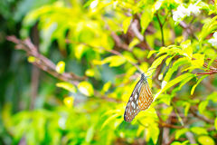 Beautiful orange color butterfly Stock Images