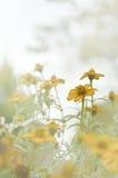 Beautiful orange color flower Stock Photography