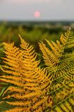 Beautiful orange fern and a single silk thread done by a spider in a sunset landscape with sun centered in background. Beautiful orange golden fern and a single Royalty Free Stock Photography