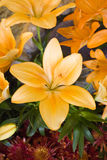 Beautiful orange flower. Close up of a beautiful orange flower Royalty Free Stock Images