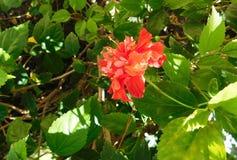 Orange flower among green vegetation. A beautiful orange flower around vegetation in the light of the sun Royalty Free Stock Image