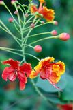 Beautiful Orange flower Stock Image