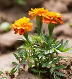 Beautiful orange flower in nature Stock Photos