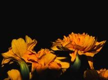 Beautiful orange flower at night stock image