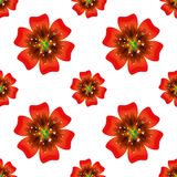 Beautiful orange flower. Seamless floral pattern. Vector Royalty Free Stock Photography