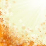 Beautiful orange flowers background Royalty Free Stock Image