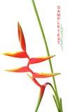 Beautiful orange flowers (Bird of paradise) Stock Photography