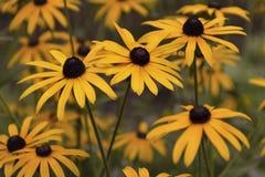 Beautiful orange flowers create a great sunny mood stock images