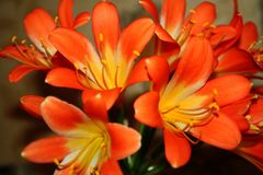 Free Beautiful Orange Flowers In All Its Glory On A Bright Sunny Day Stock Photos - 144382553