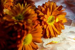 Beautiful orange flowers sparkling in the sun stock photo