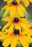 Beautiful orange flowers Stock Image