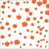Beautiful orange flowers.Vector illustration Royalty Free Stock Photo