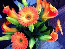 Beautiful orange flowers. Zinneas brighten up the day stock photo