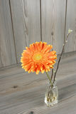 Beautiful orange gerbera Stock Image