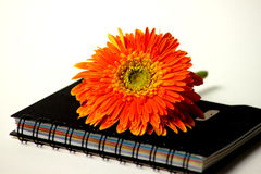 Beautiful orange gerbera flower on notebook Stock Photos