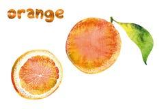Beautiful orange Stock Photo