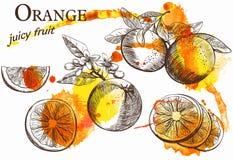 Beautiful orange Royalty Free Stock Images