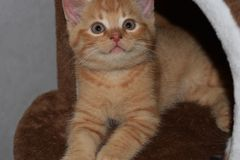 The kitten called Martin royalty free stock image