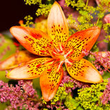 Beautiful orange lily. A beautiful orange lily with flowers Royalty Free Stock Images