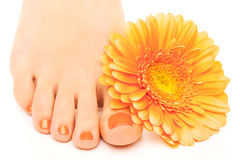 Beautiful orange manicured nails with gerbera Stock Image