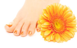 Beautiful orange manicured nails with gerbera Royalty Free Stock Photo