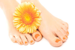Beautiful orange manicured nails with gerbera Royalty Free Stock Image