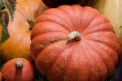 Some beautiful orange pumpkins. Beautiful orange pumpkin prepared for storage royalty free stock photos