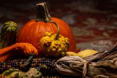 A beautiful, orange pumpkin surrounded by colorful flint corn, green squash, and golden, bumpy gourds on a autumnal tablecloth. This photograph is ideal for royalty free stock photo