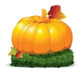 Beautiful orange pumpkin. Vector illustration. Stock Photography
