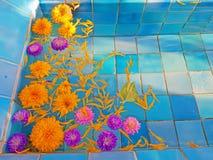 Beautiful orange and purple zinia flowers royalty free stock photo