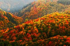 Beautiful orange and red autumn forest. Autumn forest, many trees in the orange hills, orange oak, yellow birch, green spruce, Boh. Beautiful orange and red stock images