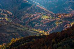 Beautiful orange and red autumn forest on hills Royalty Free Stock Images