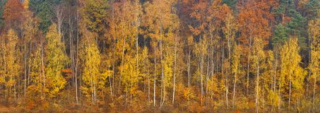 Beautiful orange, red and green autumn forest, many trees on the orange hills panorama. Autumn background long panorama web banner stock images