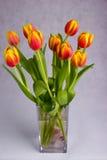 Beautiful orange red tulips on grey background. Very beautiful red and orange tulips on a grey background Stock Photo