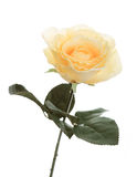 Beautiful orange rose, artificial flower. Isolated on white backg Stock Photo