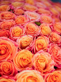 Beautiful orange rose. A lot of beautiful orange roses Royalty Free Stock Photography