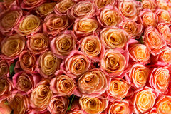 Beautiful orange rose. A lot of beautiful orange roses Royalty Free Stock Photo