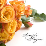 Beautiful orange roses Stock Photo