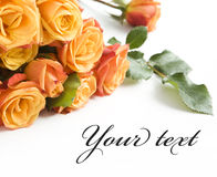 Beautiful orange roses Royalty Free Stock Image