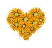 Beautiful Orange Sunflower in A Heart Shape Royalty Free Stock Photo