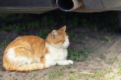 Beautiful orange tabby cat sleeping on ground under car on summer day. Danger of being hit by car at start.  stock image