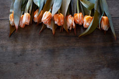 Beautiful orange tulips on a dark wooden background. View from above with copy space Royalty Free Stock Photography