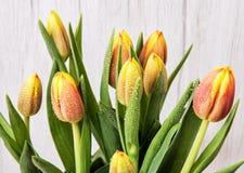 Beautiful orange tulips with dew, cut flowers Royalty Free Stock Photo