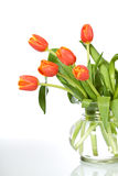 Beautiful orange tulips in glass vase - isolated Stock Images
