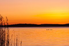 Beautiful orange winter sunset over water and land with birds on a lake. Beautiful orange winter sunset over water and land with birds on a lake and reed in the Royalty Free Stock Images