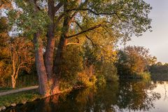 Trees along the water are illuminated by the setting sun royalty free stock photo