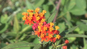 Beautiful orange and yellow flowers. Video of beautiful orange and yellow flowers stock footage