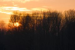 Sunset behind bare trees royalty free stock image