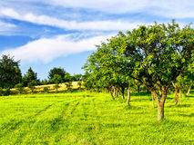 Beautiful spring orchard Stock Photography
