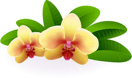 Beautiful Orchid. Stock Photo